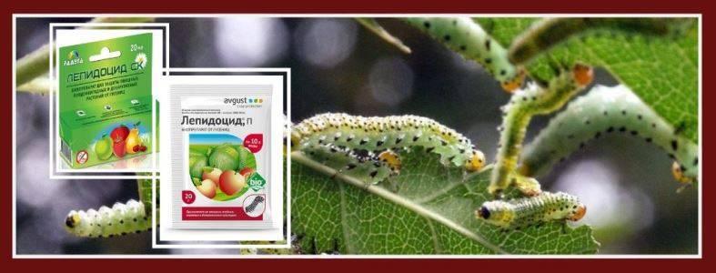 Лепидоцид — замечательный биопрепарат для борьбы с вредителями