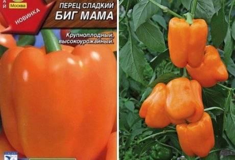 Перец биг мама: характеристика и описание сорта