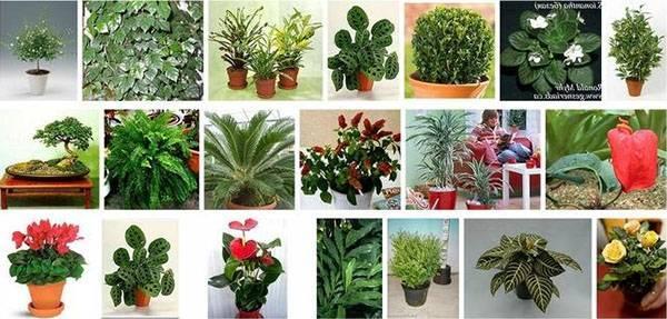 10 самых тенелюбивых комнатных растений: названия и фото