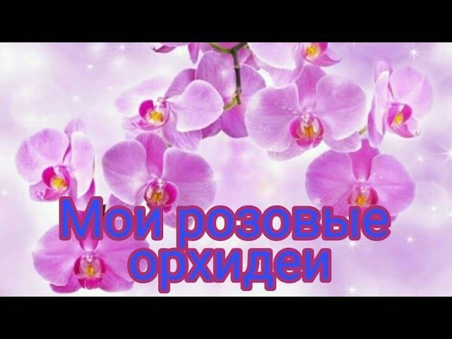 Популярная у цветоводов розовая орхидея – фото, описание сортов, нюансы выращивания