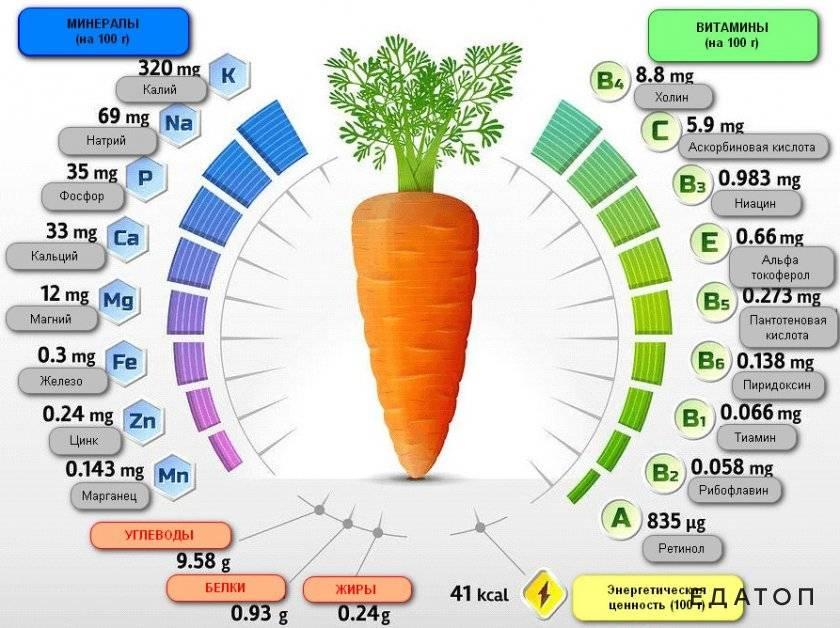 Какие витамины в моркови - полезные свойства моркови