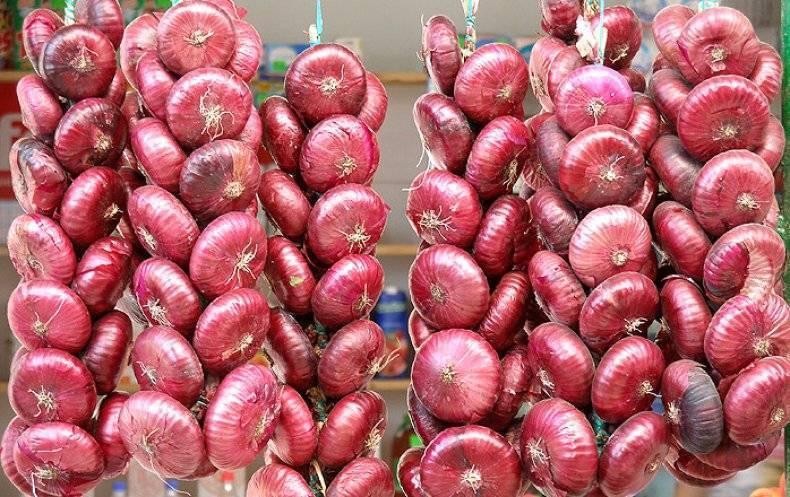 Подарок крыма — ялтинский лук. характеристика сорта, агротехника выращивания, сбор урожая