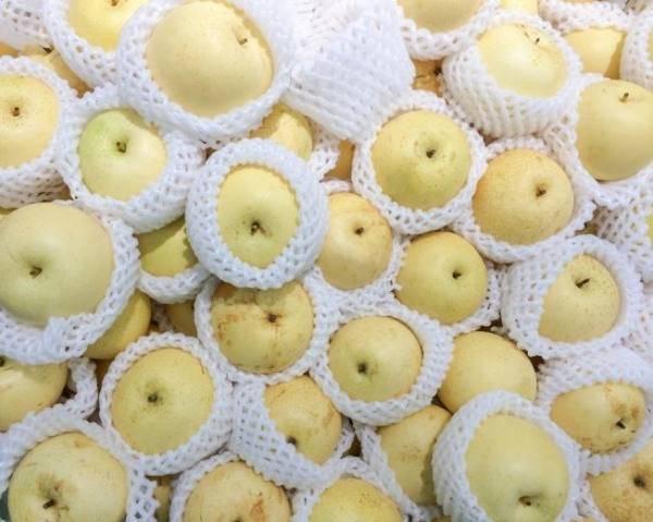 Чижовская – удачный выбор для любителей груш