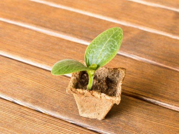 Через сколько дней всходят семена: как долго прорастают, сроки
