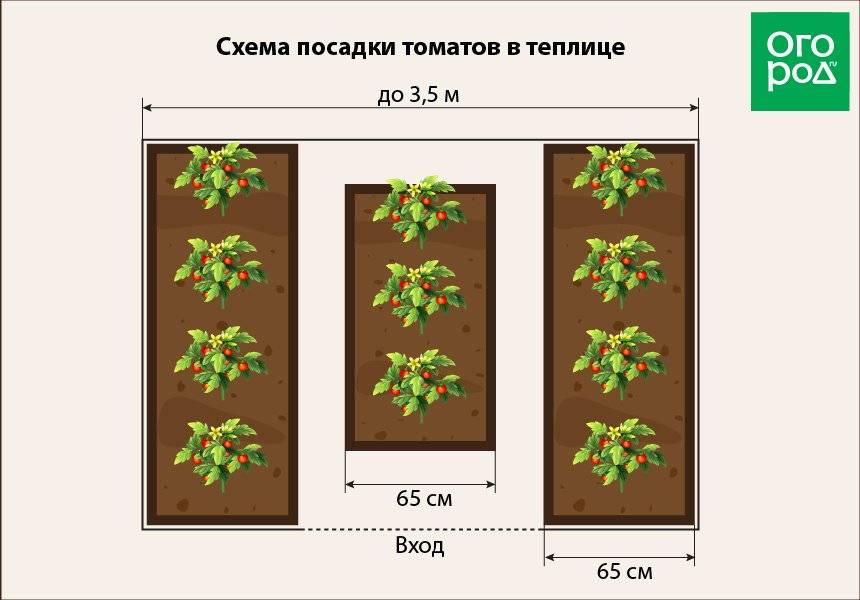 Секреты богатого урожая: нюансы посадки помидоров в открытый грунт и особенности ухода за ними