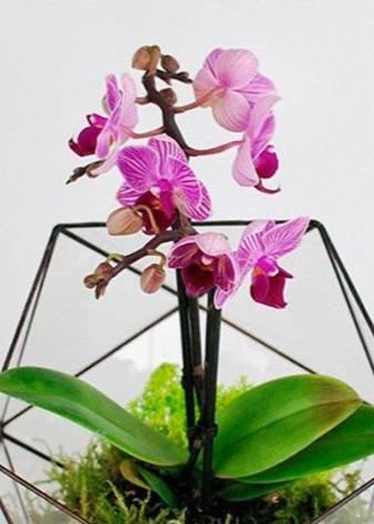Орхидея в стеклянной вазе: выращивание, посадка и уход, требования к сосуду, фото