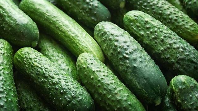Огурец паратунка f1: описание и отзывы, урожайность сорта, фото