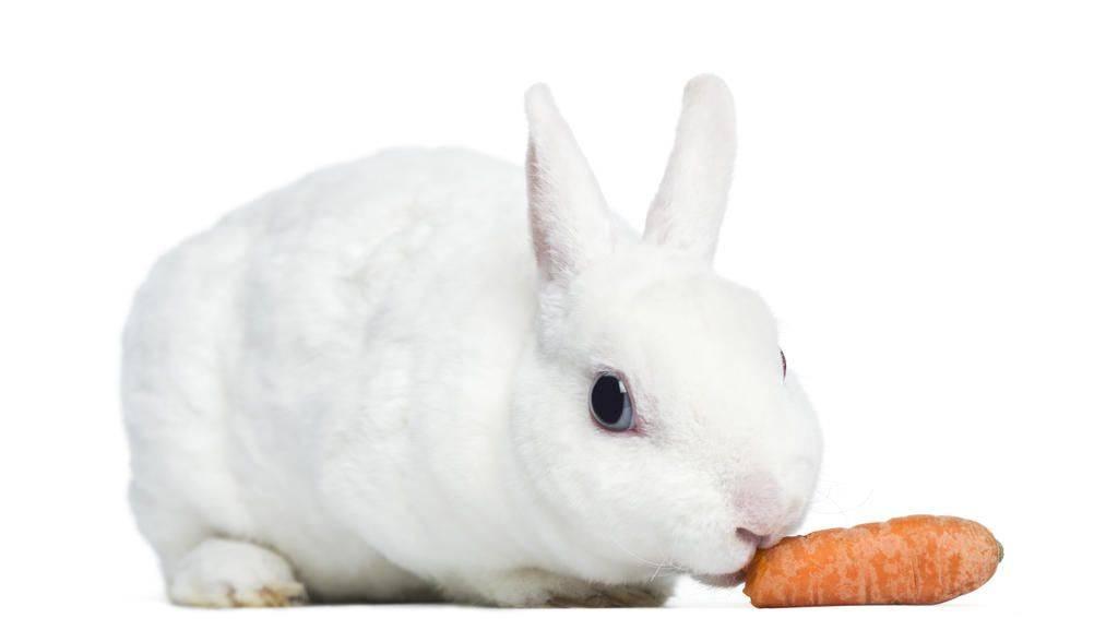Дитрим для собак, кошек, свиней, телят и других видов животных   инструкция по применению дитрима в ветеринарии