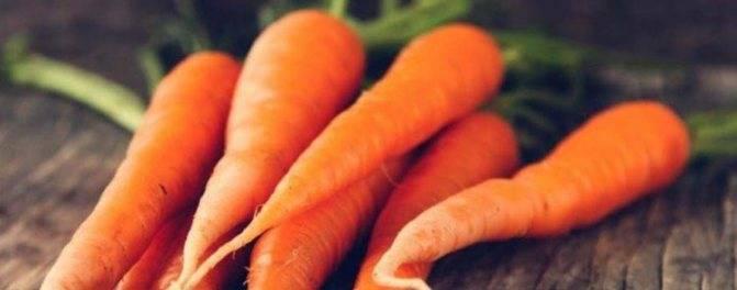 Морковь: выращивание на огороде, хранение, виды