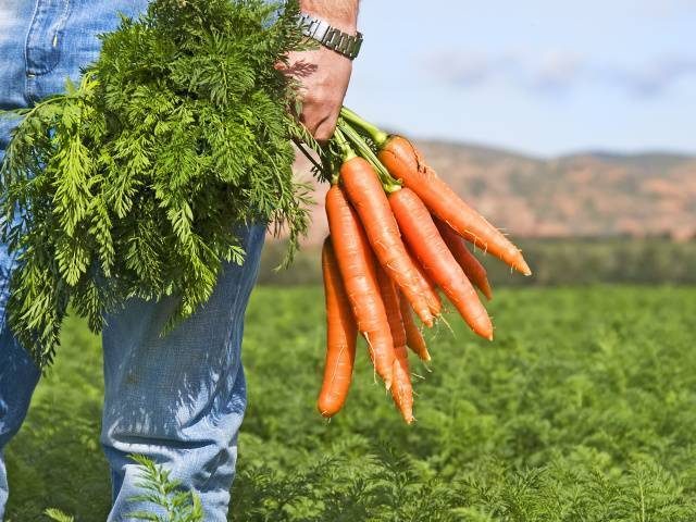 Можно ли беременным пить морковный сок