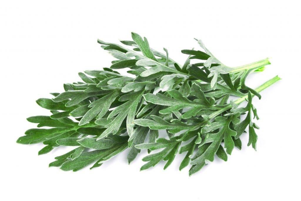 Лечебные травы при гастрите: какие можно пить | компетентно о здоровье на ilive