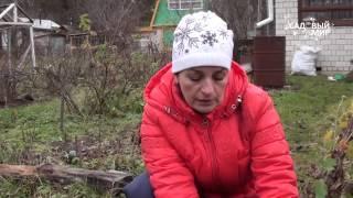 Уход за хризантемами осенью подготовка к зиме: укрытие, как сохранить, что делать уход за хризантемами осенью подготовка к зиме: укрытие, как сохранить, что делать