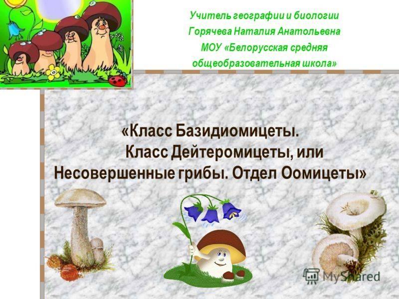 Несовершенные грибы и их представители