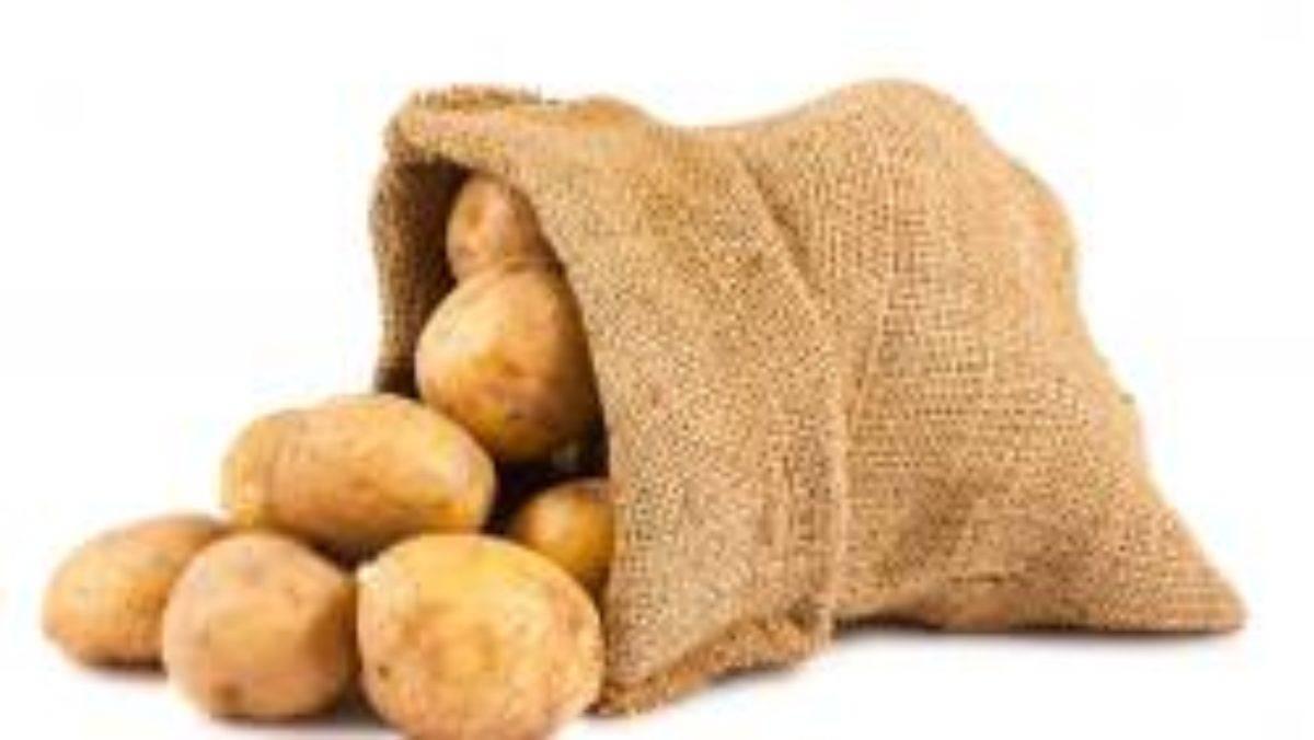 Картофель винета: описание и характеристика сорта, фото, отзывы