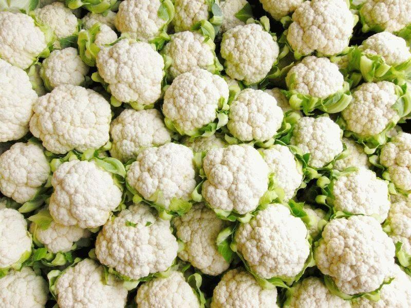 Лучшие сорта цветной капусты: самые урожайные с описанием и фото