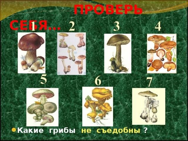 Как отличить съедобный гриб от несъедобного?