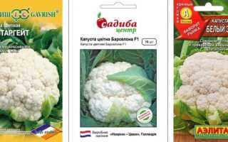 Лучшие сорта и гибриды цветной капусты - описание, характеристики сортов
