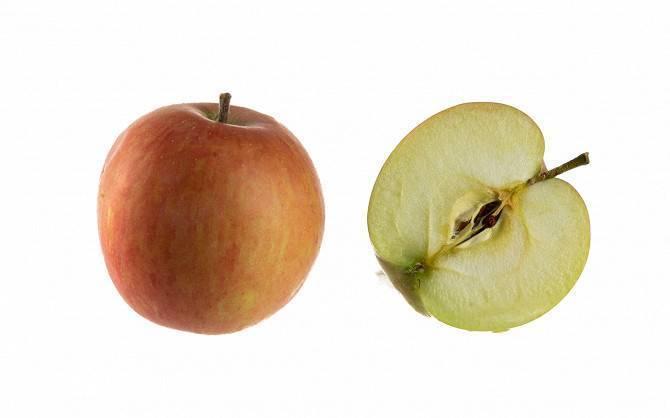 Летние сорта яблонь и их фото с названием и описанием