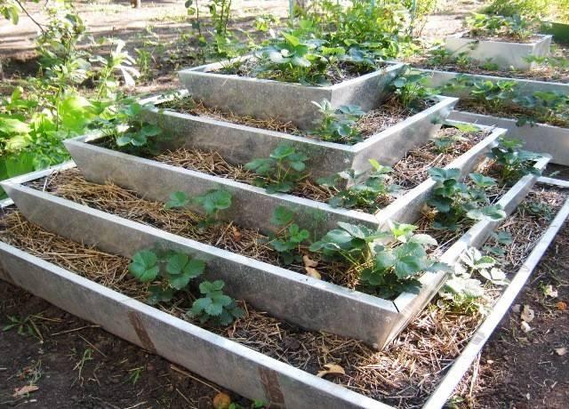 Вертикальное выращивание клубники: преимущества, недостатки