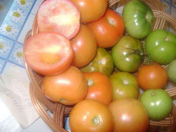 Как бороться с фитофторой на помидорах народными методами