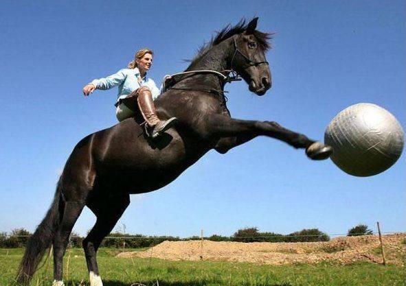 Как правильно седлать лошадь