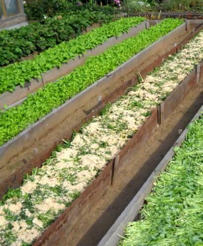 Какие удобрения нужны для огорода весной: топ самых полезных