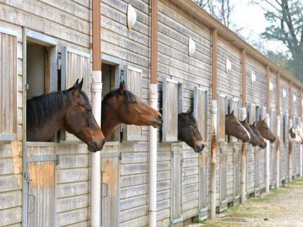 Мастеркласс по строительству конюшни и загона для лошадей