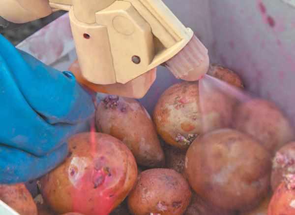 Вредители картофеля: описание с фото, борьба с ними и лечение