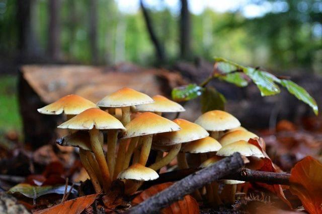Съедобные грибы – список, фото, название, описание, видео, когда и где растут