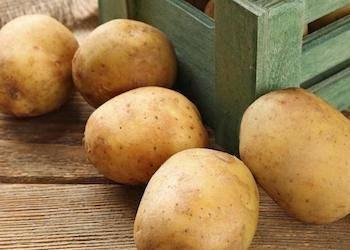 Из-за чего картофель уходит в ботву? | фермер почему у картофеля может быть высокая ботва? | фермер