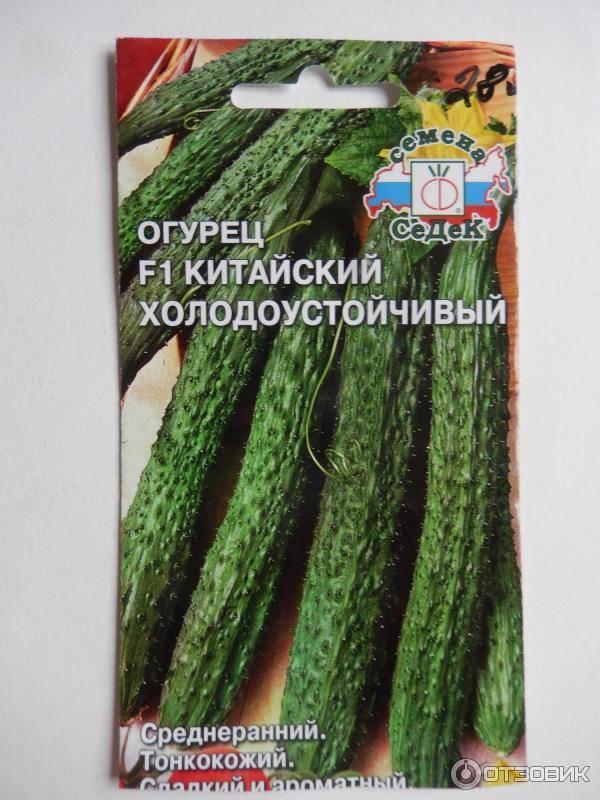 Китайский огурец — необыкновенная разновидность привычного овоща