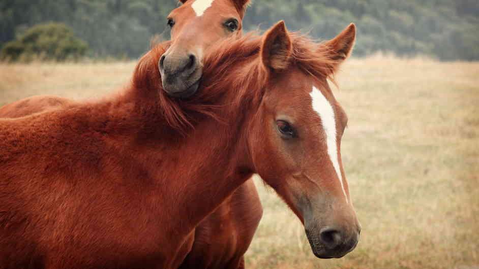 Сколько живут лошади: продолжительность жизни коня в среднем в домашних и диких условиях