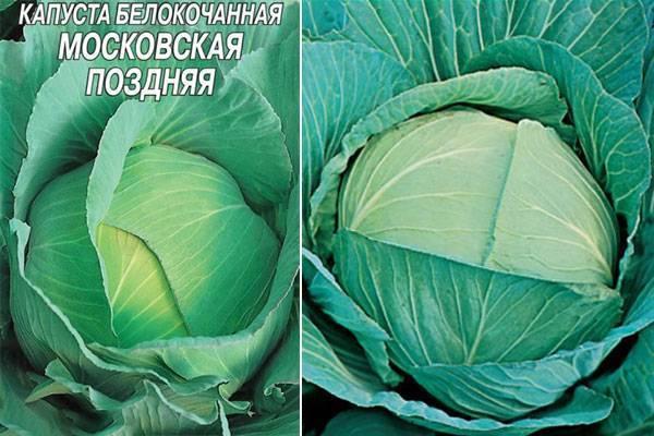 Лучшие сорта поздней капусты: описание с фото и характеристиками, плюсы и минусы, советы огородников