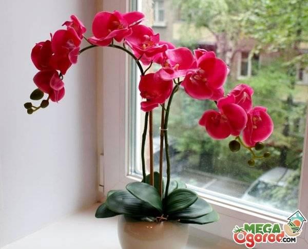 Что делать, если орхидея замерзла? как спасти замерзшее растение, как оживить и как реанимировать цветок, примерзший на окне, как перевести и как укутать при транспортировке зимой, фото и видео от специалистов