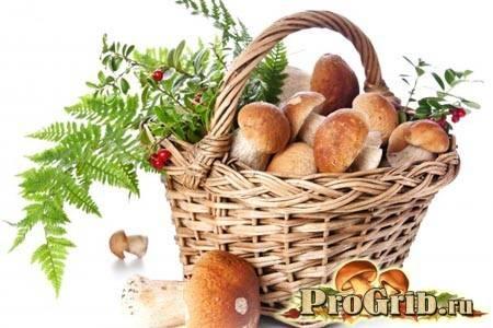 Чем полезны грибы, сколько в них калорий и бжу, какие витамины содержатся (+таблицы)