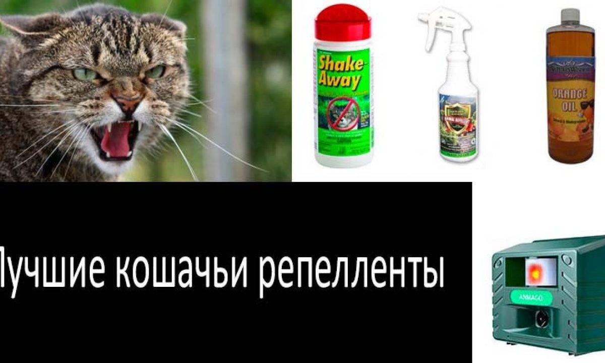 Опасны ли для кошек цитрусовые растения?