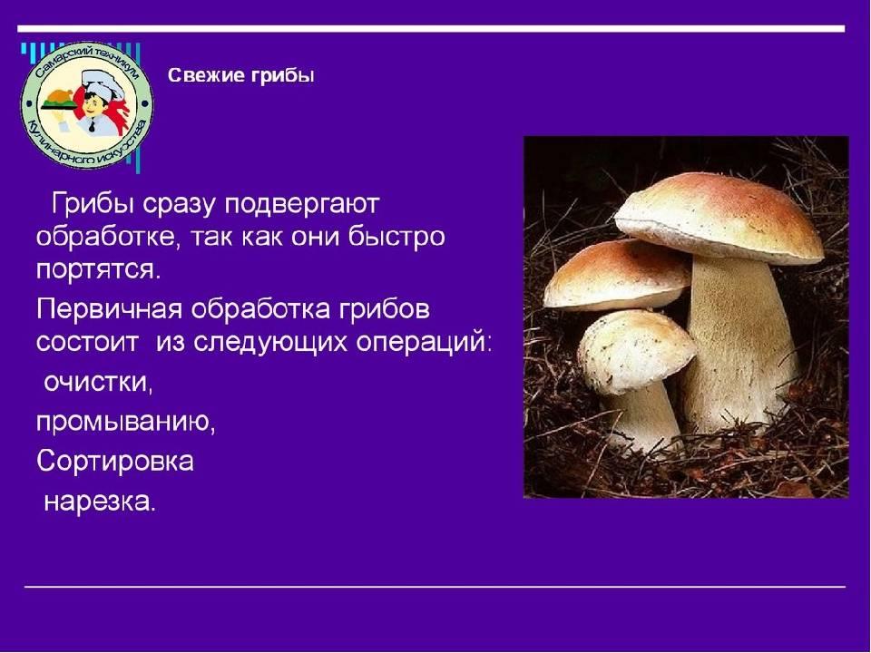 Особенности и советы по чистке белых грибов (+16 фото)
