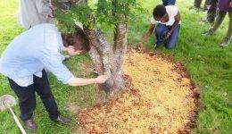Опилки на дачном участке: как получить больше урожая