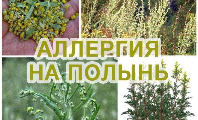 Аллергия на растения | компетентно о здоровье на ilive