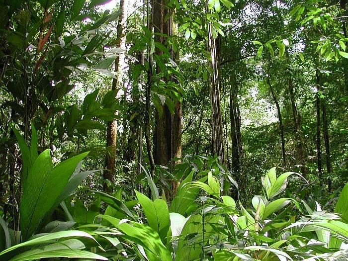 Экваториальный пояс: климат, страны, почвы, леса, растения и животные