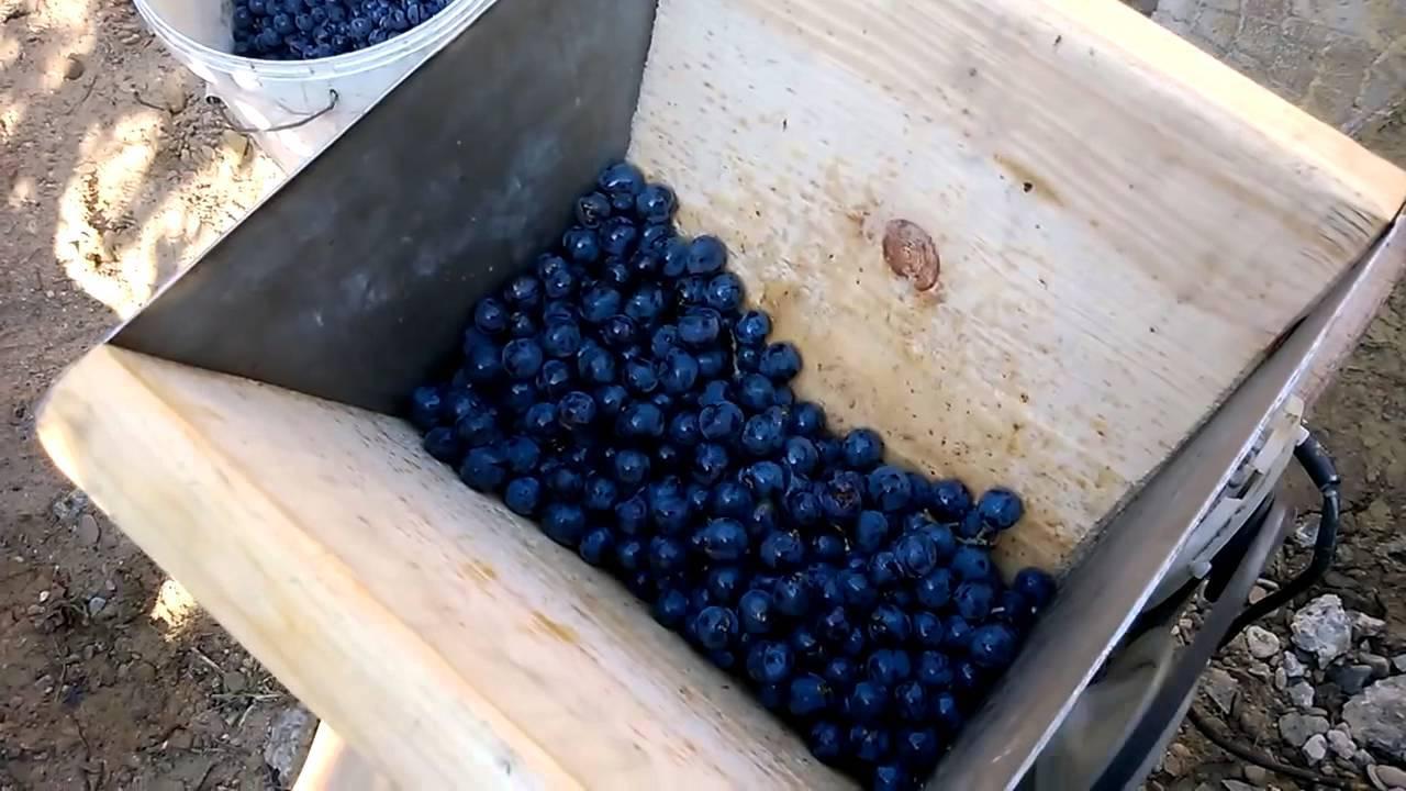 Зачем нужна дробилка для винограда | hi-tech | селдон новости