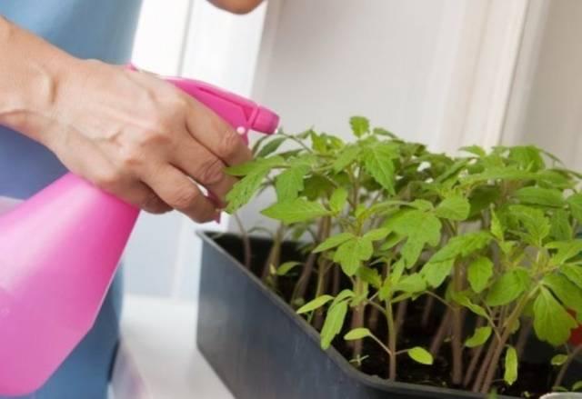 Когда лучше сеять помидоры на рассаду в сибири