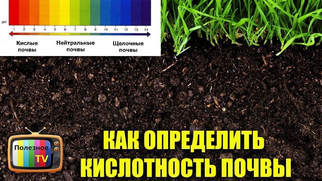 Костная мука как удобрение: использование в саду и огороде, польза и особенности применения, свойства