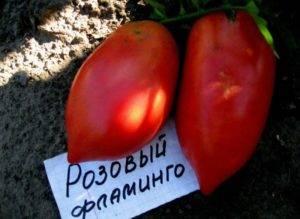 Характеристика и описание сорта томата розовый спам – дачные дела
