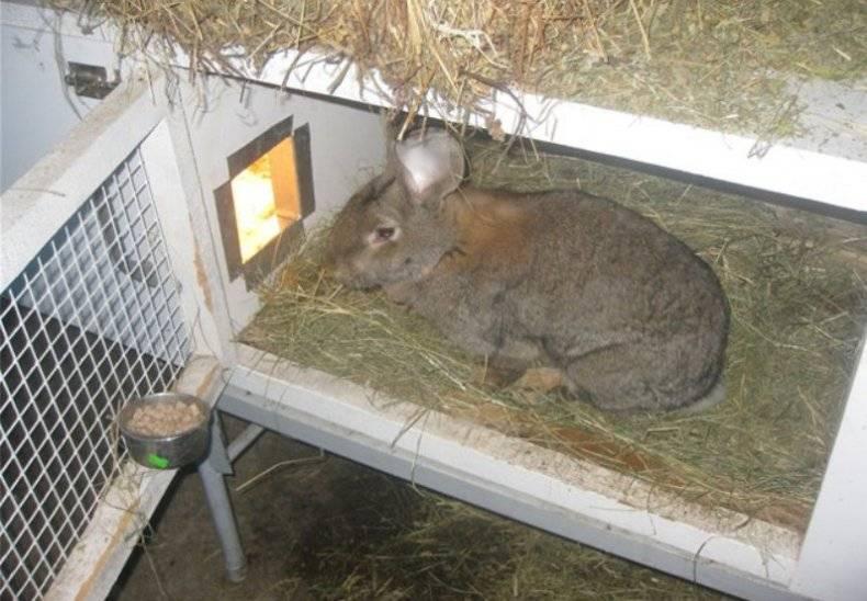 Как поить кроликов зимой?