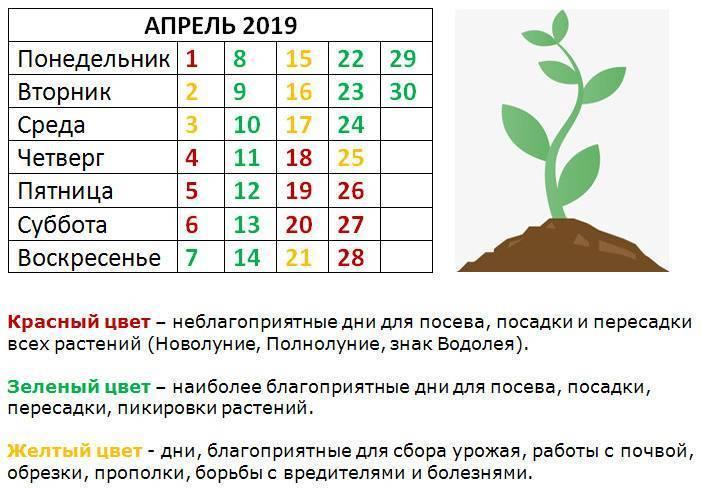 Посадка кабачков в 2021 году: календарь, когда сажать