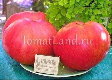 Томат розовый мёд - описание сорта, характеристика, урожайность, отзывы, фото