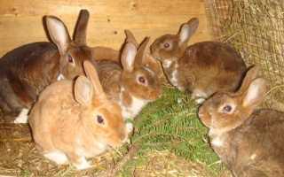 Читать книгу самый полный справочник кроликовода александра снегова : онлайн чтение - страница 9