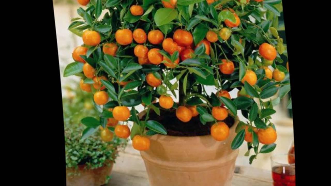 Топ-28 растений которые можно вырастить из косточки