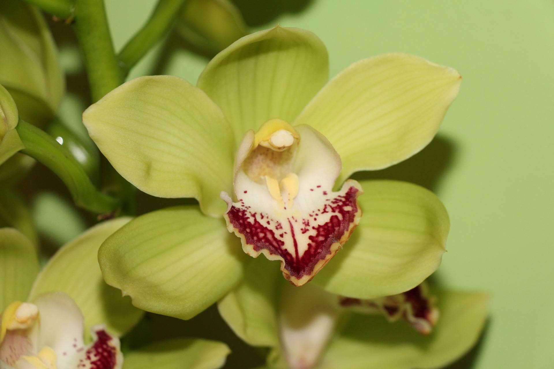 Какие существуют цветы, похожие на орхидею?